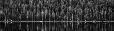 tenaya_lake_trees