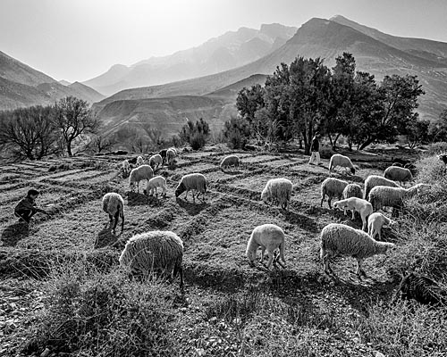 boy_and_sheep_Oulad_Ali