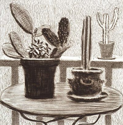 cacti_on_terrace
