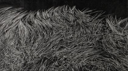 grasses_afloat