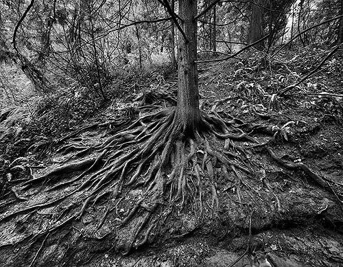 hemlock_tree_arboretum