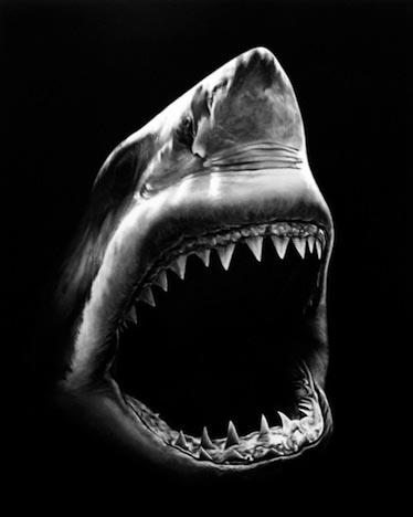 shark_5a