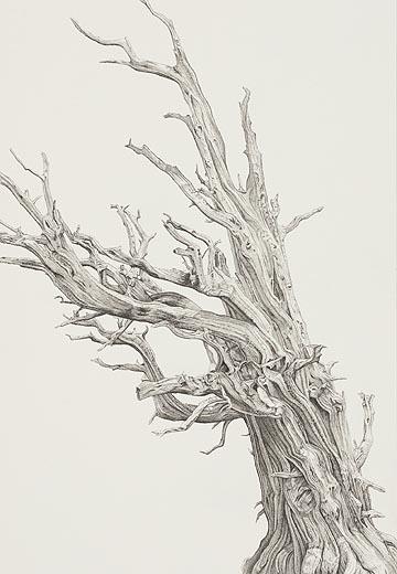 tree_15