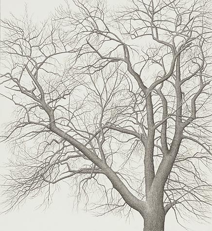 tree_20