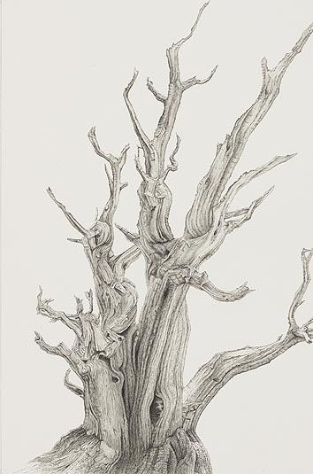 tree_22
