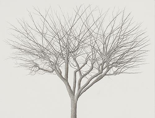 tree_23