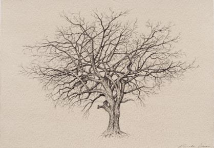 tree_3