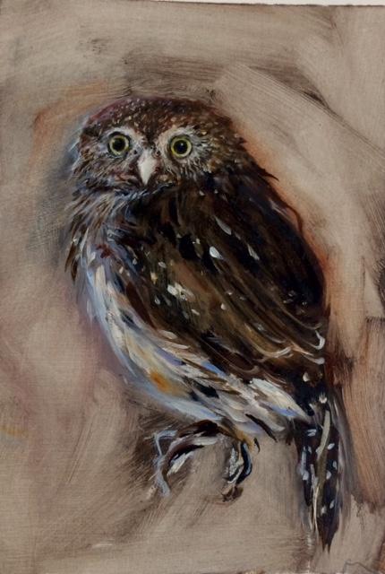 Owl 1390